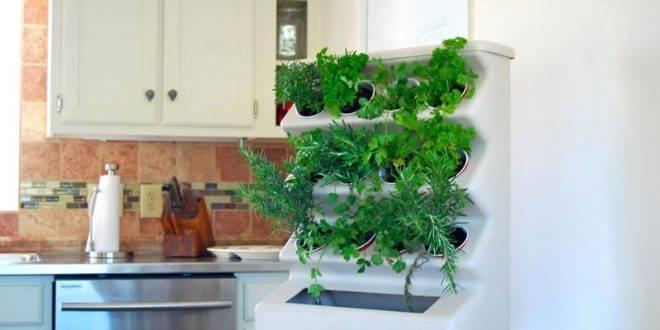 Домашние агрофермы, или Вертикальное озеленение с пользой